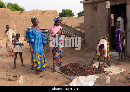 Female villagers collecting shea nuts in front of a small building with an oilpress. Mali, West Africa - Stock Photo