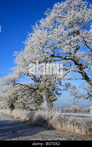 Hoar Frost on Trees Wales UK United Kingdom Europe - Stock Photo