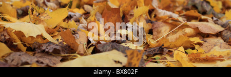 Autumnal leaves in yellow and brown colors - Stock Photo