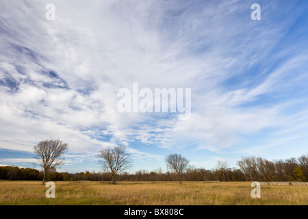 Row of barren trees and wild grass during late winter at the Spiro Mounds Archeological Site in Oklahoma, USA. - Stock Photo