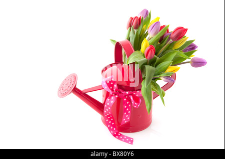 colorful bouquet tulips in pink watering can - Stock Photo
