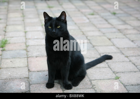 A black cat sits on a pavement looking off camera - Stock Photo