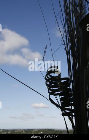 house pot plant silhouette against blue sky - Stock Photo