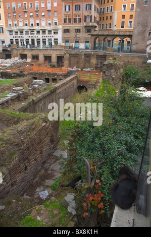 Black cat at Largo di Torre Argentina square Rome Italy Europe - Stock Photo