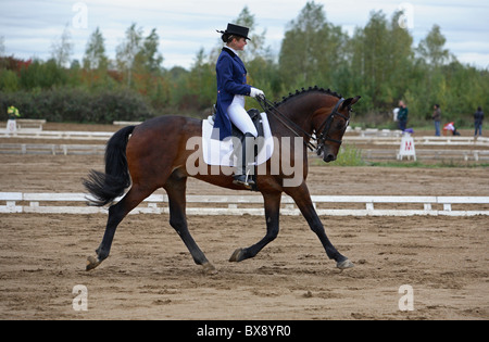 Young dressage lady rider on back of her German horse wearing riding boots spurs riding breeches and a riding helmet - Stock Photo