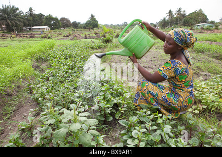 A young farmer waters vegetables in her garden in Kakata, Liberia, West Africa. - Stock Photo