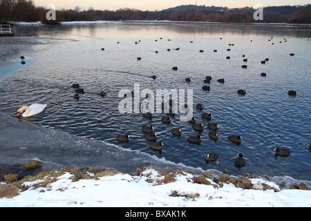 Winter Parkland Scenes Nottingham England - Stock Photo