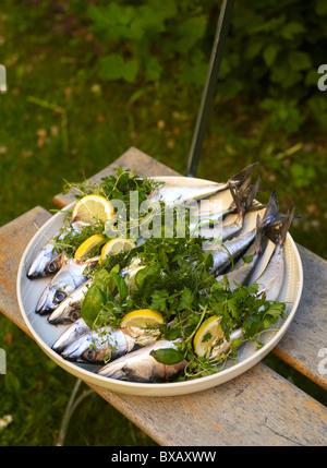 Mackerel fish with lemon slice and herbs - Stock Photo