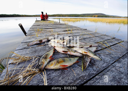 Dead fish lying down on jetty, mother with son fishing in the background - Stock Photo