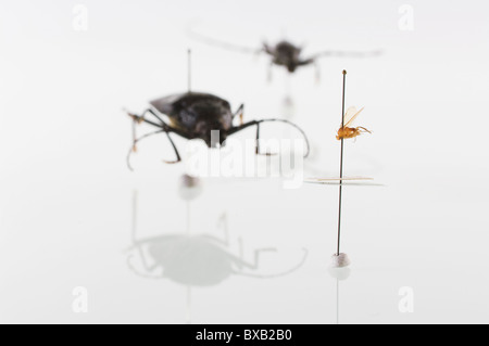 Studio shot of bug specimens on white background - Stock Photo