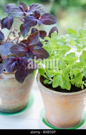 Herbs in terracotta flower pots - Stock Photo