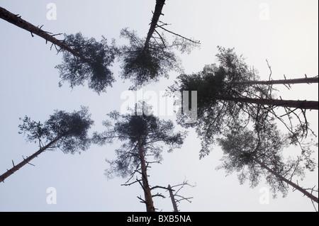 Tall trees against sky - Stock Photo