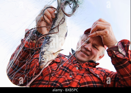 Fisherman taking out fish from fishing net - Stock Photo