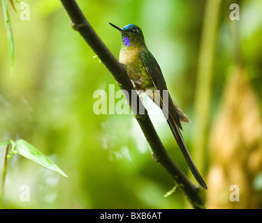 Humming bird perching on branch - Stock Photo