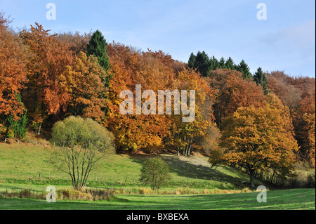 Farmland and forest in autumn colours in the Ardennes, Belgium - Stock Photo