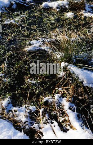 Grass frozen in ice - Stock Photo