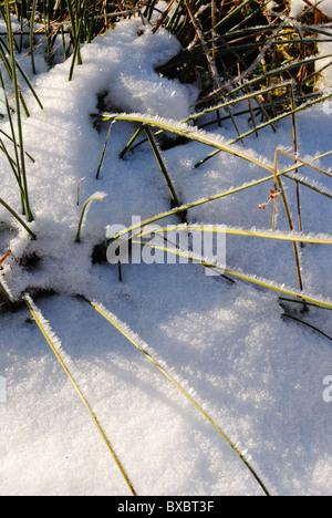 Hoarfrost crystals on grass - Stock Photo