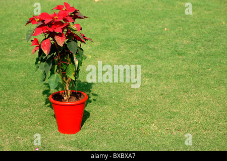 A red flower pot in green lawn - Stock Photo