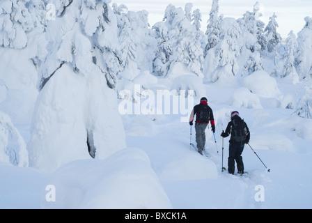 Off-piste skiers opening track among snow-clad trees in Pyhätunturi fell, Finnish Lapland - Stock Photo