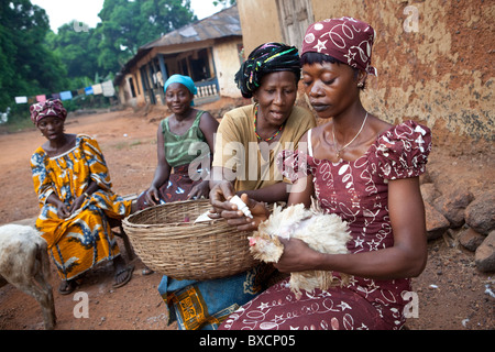 Villagers gather to receive vaccinations for their chickens in Port Loko, Sierra Leone, West Africa. - Stock Photo