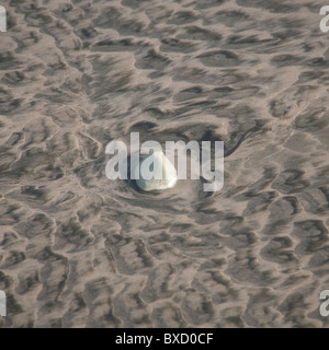 Stones and sea shells along the beach in Costa Rica - Stock Photo