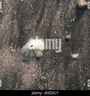 Sea shells along the beach in Costa Rica - Stock Photo