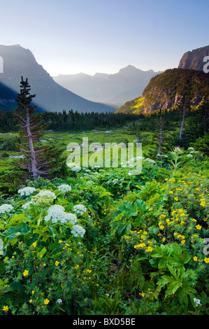 Logan Pass at sunrise in Glacier National Park, Montana. - Stock Photo