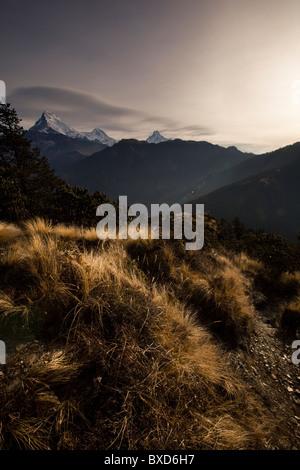 Scrub, high alpine grass and a mountain range in Nepal. - Stock Photo