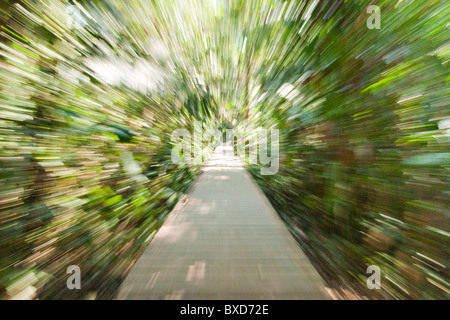 A wooden path through the rainforest in warped speed. - Stock Photo