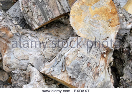 Wooden trunks. Stacked cut logs - Stock Photo