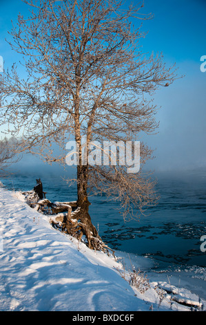 Lone tree by the river with a foggy background - Stock Photo