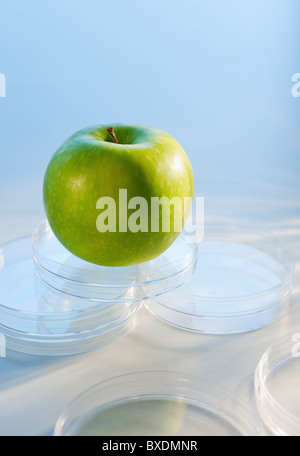 Apple in Petri dish - Stock Photo