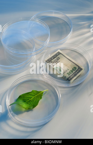 Money and leaf in Petri dish - Stock Photo