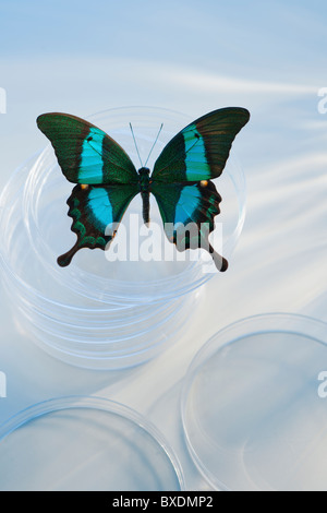 Butterfly in Petri dish - Stock Photo