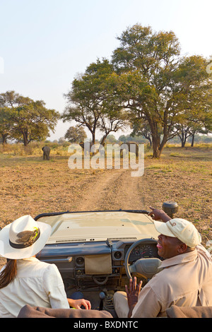 On safari in South Luangwa National Park, Zambia. Visitors watch wild elephants from the safety of their safari - Stock Photo