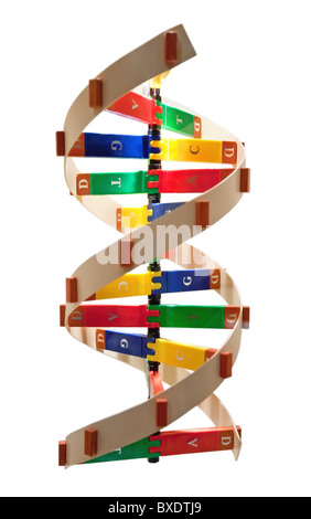 The structure of a DNA double helix. - Stock Photo