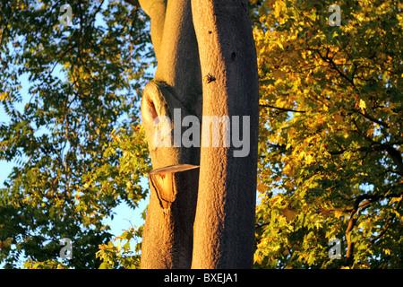 Sunlight falling on two trees, Surrey, England, UK - Stock Photo