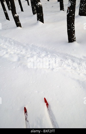 Winter still life with red pair of skis - Stock Photo