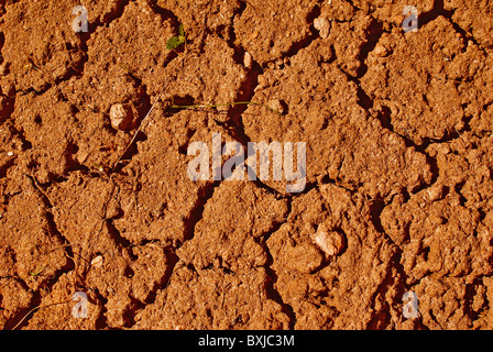 Cracked dry ground and small green sapling - Stock Photo