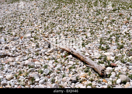 with round stones and white wood cut on the river bed - Stock Photo