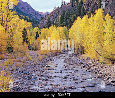 Cottonwood Creek with golden autumn aspen along Cinnamon Pass Road, Gunnison National Forest, Colorado, USA - Stock Photo