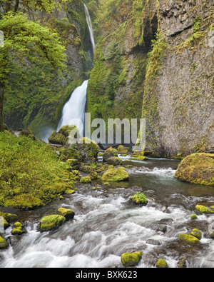 Wahclella Falls in Tanner Creek Gorge, Columbia River Gorge National Scenic Area, Oregon, USA - Stock Photo