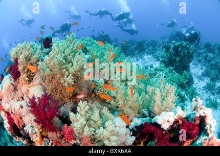 Scuba Divers pass by a coral reef photographed at Ras Mohammed National Park, Red Sea, Sinai, Egypt, - Stock Photo