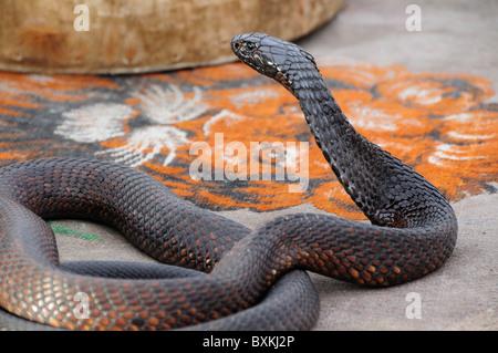 Snake Charmers in Jemaa El Fna Square in Marrakech Stock ...