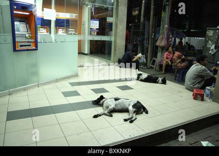 Dogs sleeping on the street , Bangkok - Stock Photo