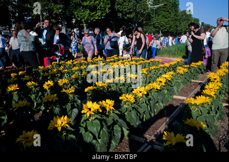 Crowd Tourists Visiting Paris, France, Garden Festival, Sunflowers on Champs-Ely-sees - Stock Photo
