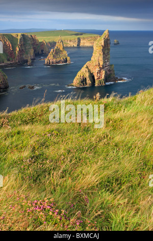 Late evening sunshine over Duncansby Stacks, Caithness, Scotland - Stock Photo