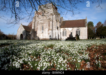 A carpet of snowdrops in the churchyard of St George's Church at Damerham in Hampshire, England. - Stock Photo