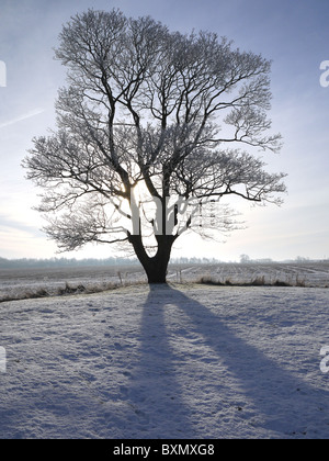 View of a frozen tree silhouetted against a grey winter sky and the low backlit sun  casting a long shadow over - Stock Photo