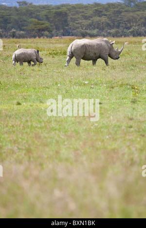 Rhinoceros and baby, Lake Nakuru, Kenya - Stock Photo